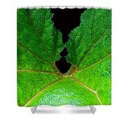 Green Spider Leaf Shower Curtain