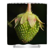 Green Strawberry Shower Curtain