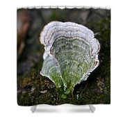 Green Turkey Tails Shower Curtain