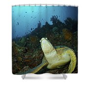 Green Turtle On Reef, Manado, North Shower Curtain