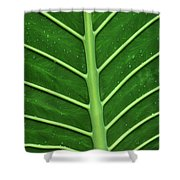 Green Veiny Leaf 1 Shower Curtain