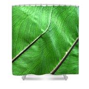 Green Veiny Leaf 2 Shower Curtain
