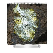 Green, White And Brown Flatworm, Bali Shower Curtain