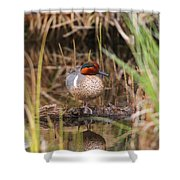 Greenwing Teal Shower Curtain