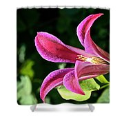 Greet The Day Shower Curtain