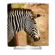 Grevys Zebra Shower Curtain