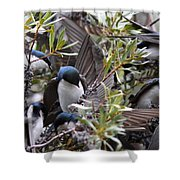Grey Feathers - Tree Swallow Shower Curtain