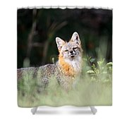 Grey Fox - The Man Shower Curtain