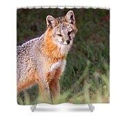 Grey Fox - Vantage Point Shower Curtain