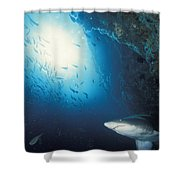 Grey Nurse Shark Turning Away From Reef Shower Curtain