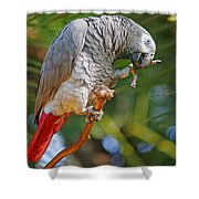 Grey Parrot Shower Curtain