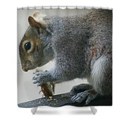 Grey Squirrel Dining Out Shower Curtain