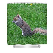 Grey Squirrel In The Rain Shower Curtain