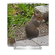 Grey Squirrel Shower Curtain