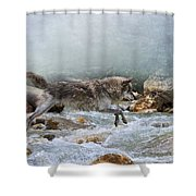 Grey Wolf Jumping Over A Mountain Stream Shower Curtain