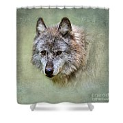 Grey Wolf Portrait Shower Curtain