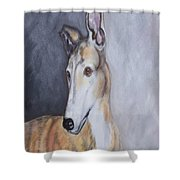 Greyhound In Thought Shower Curtain