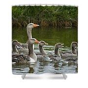 Greylag Goose Anser Anser Couple Shower Curtain