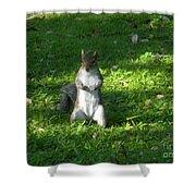 Greynolds Park Squirrel Shower Curtain
