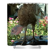 Grill Turkey Anyone Redneck Style Shower Curtain