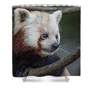 Grimacing Red Panda Shower Curtain