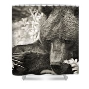 Grizzly At Rest Shower Curtain