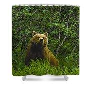 Grizzly Bear Alaska Shower Curtain