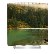 Grizzly Bear Fishing In Chilkoot River Shower Curtain