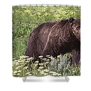 Grizzly Bear In Yellowstone Neg.28 Shower Curtain