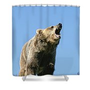 Grizzly Bear Vocalizing Shower Curtain