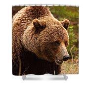 Grizzly Bear, Yukon Shower Curtain
