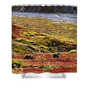 Grizzly Bears And Fall Colours, Denali Shower Curtain