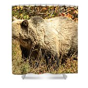 Grizzly Camouflage Shower Curtain