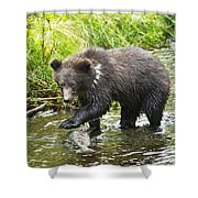 Grizzly Cub Catching Fish In Fish Creek Shower Curtain