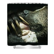 Grizzly Eating Shower Curtain