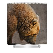 Grizzly Hanging Head Shower Curtain
