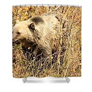 Grizzly In The Brush Shower Curtain