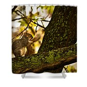 Grooming Grey Squirrel Shower Curtain