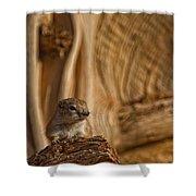 Ground Squirrel At Monument Valley Shower Curtain