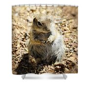 Ground Squirrel Shower Curtain