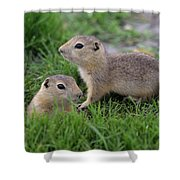 Ground Squirrels, Oak Hammock Marsh Shower Curtain
