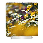 Group Of Daisies Shower Curtain