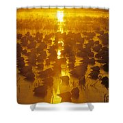 Group Of Hundreds Of Snow Geese Resting Shower Curtain