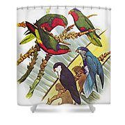 Group Of Lorys Shower Curtain