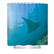 Group Of Manta Rays In Blue Water Shower Curtain