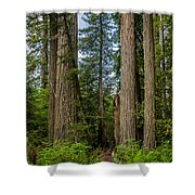 Group Of Redwoods Shower Curtain