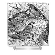 Group Of Sparrows Shower Curtain
