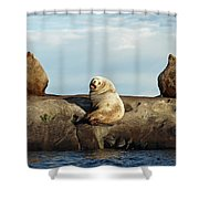 Group Of Three Shower Curtain