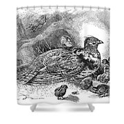 Grouse And Young Shower Curtain