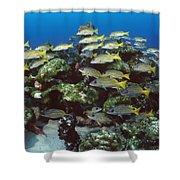 Grunt School Along Coral Reef Cocos Shower Curtain by Flip Nicklin